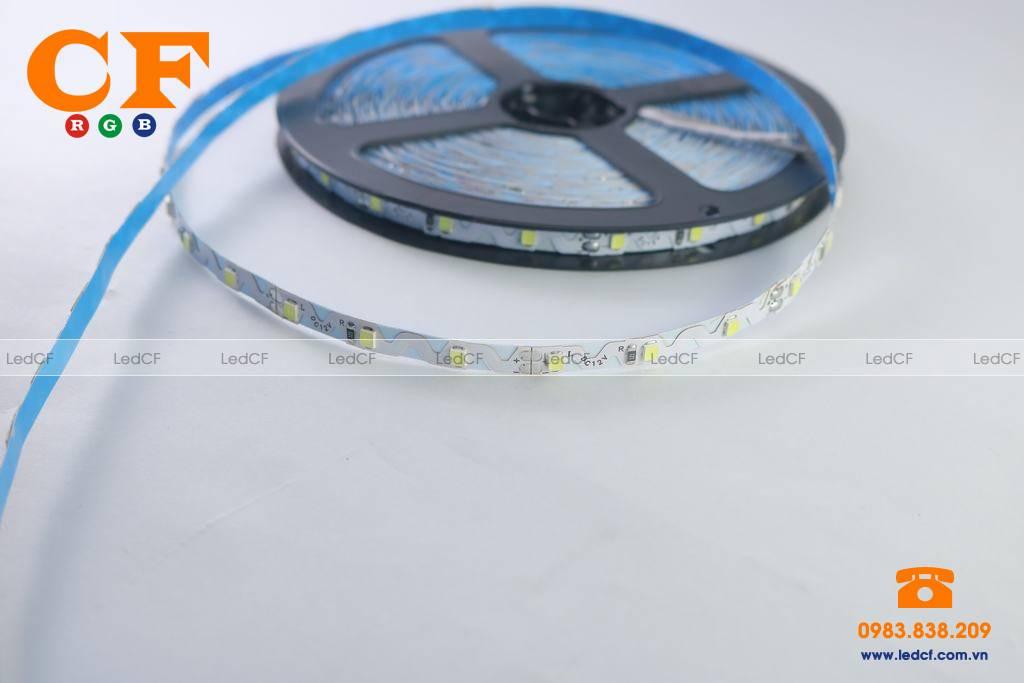 Tìm hiểu về led dây dán 3528 màu xanh dương