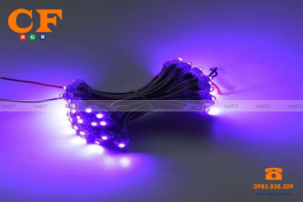 Các loại đèn led đúc 12v trên thị trường hiện nay?
